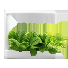 جهاز Kitchen Box للزراعة المائية